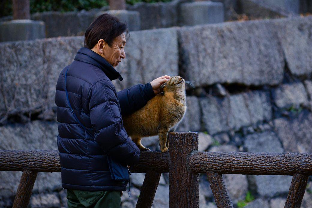 Animales de Japón, el gato