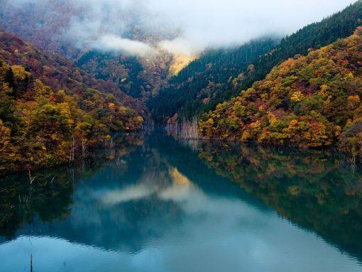 Bosques de Japón