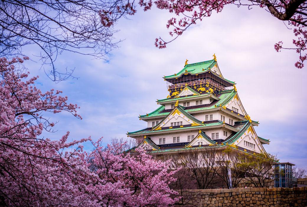 Castillo de Osaka con flores sakura