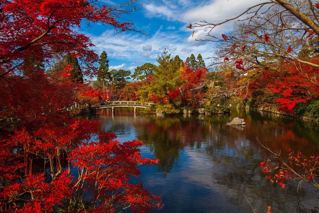 Jardín japonés con árboles de flores rojizas