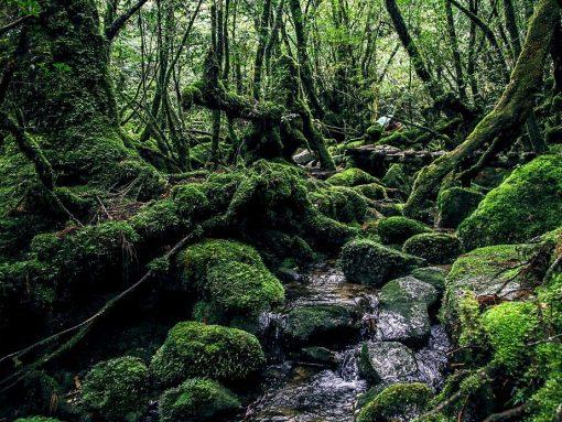 Bosque de la isla de Yakushima en Japón