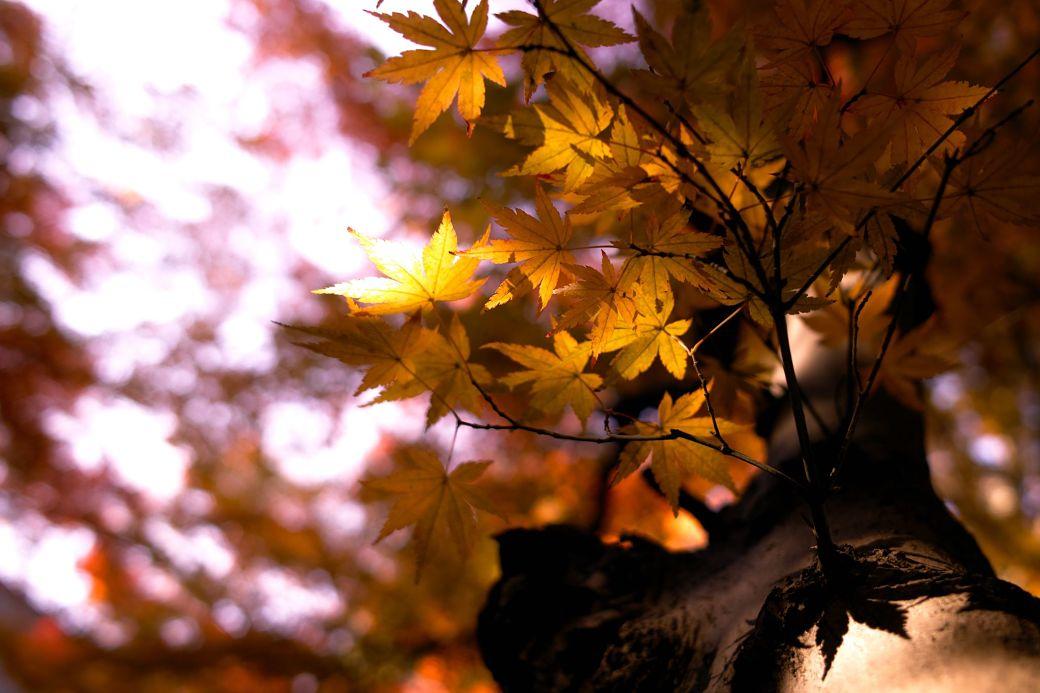 Color hojas en otoño, Japón