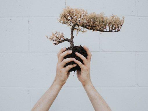 Manos sujetando pequeño bonsái japonés
