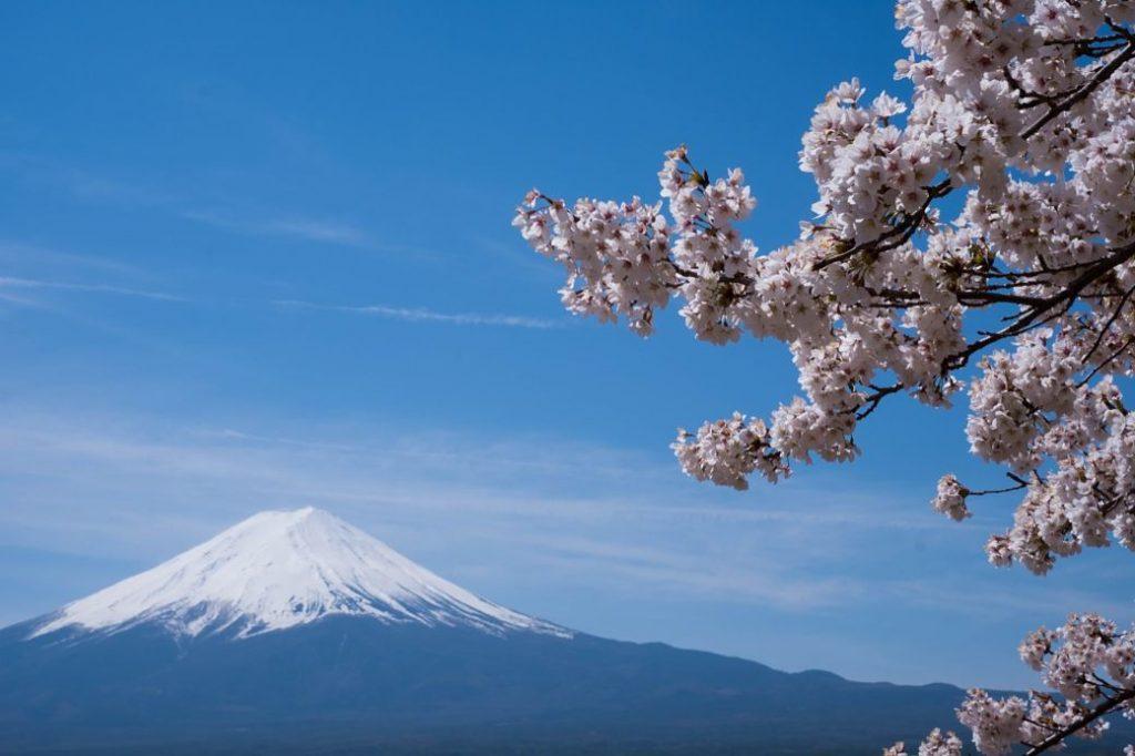 Minte Fuji y flores de cerezo