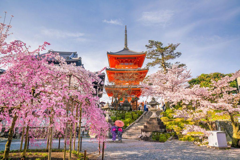 Pagoda de templo Kiyomizudera en Kioto con árboles de sakura florecidos