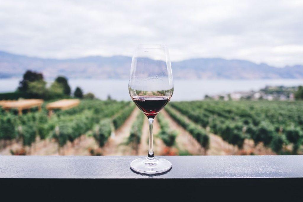 Imagen copa de vino tinto con paisaje de la vid de fondo