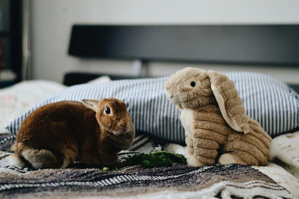 Conejo junto a un peluche de conejo encima de una cama