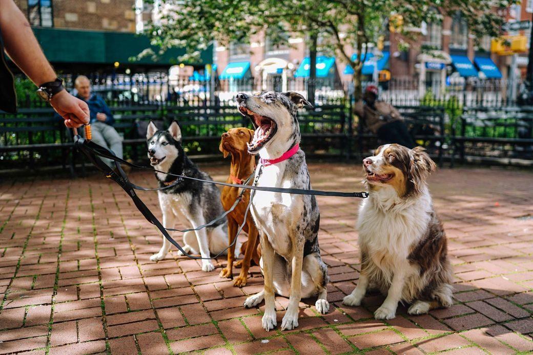 4 perros de distintas razas sentados en un parque con su dueño